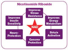 Nicotinamide Riboside Protects Brain Cells
