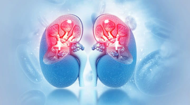 Top Supplements To Improve Kidney Function Life Extension