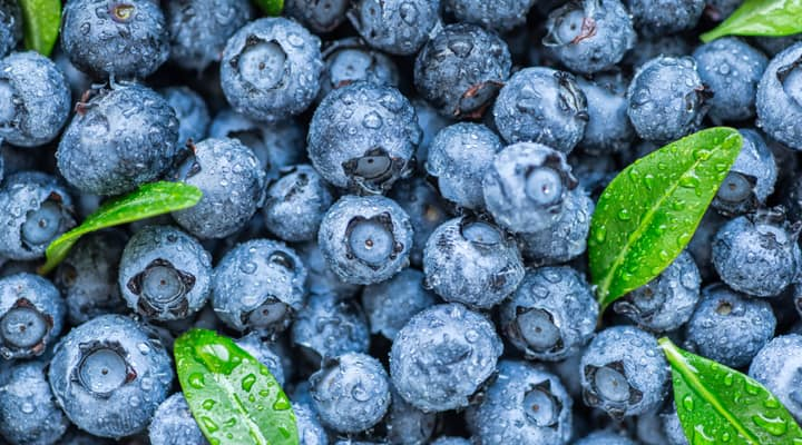 Blueberries with water droplets that are known to combat aging