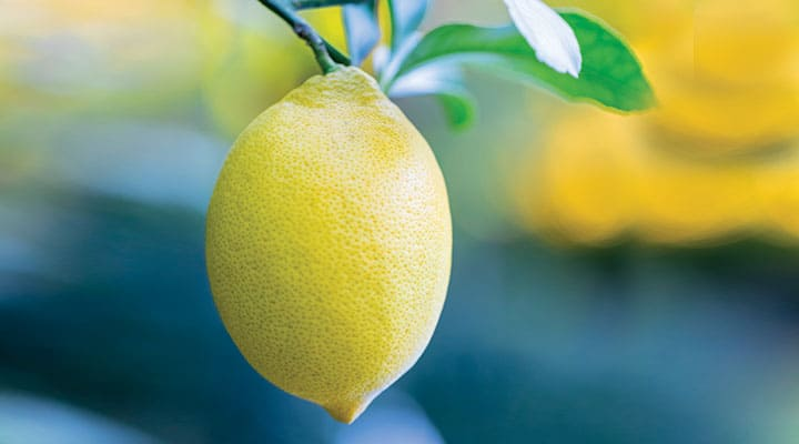 Lemon on branch proposed to improve blood glucose levels