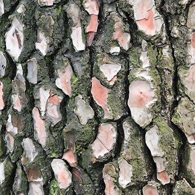 venoflow pinebark is