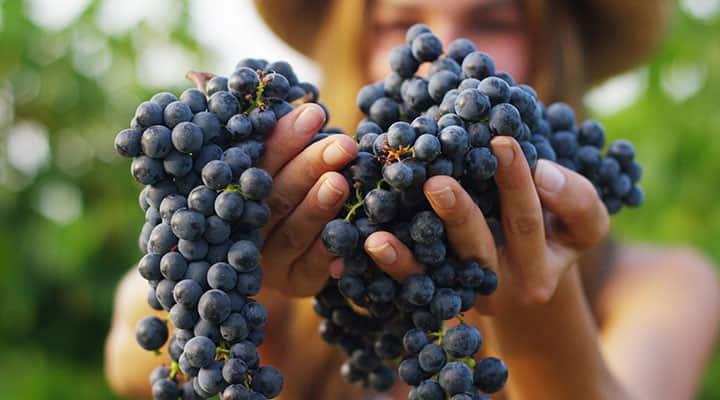 Woman holding grapes naturally containing resveratrol