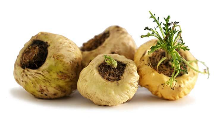 Maca rootsa rich source in fiber and fatty acids