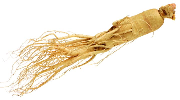 Asian ginseng root good for managing stress