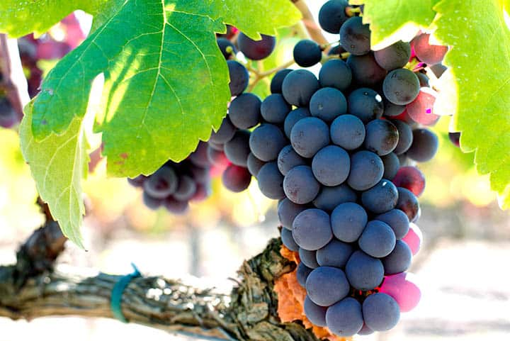 Grapes may protect against macular degeneration