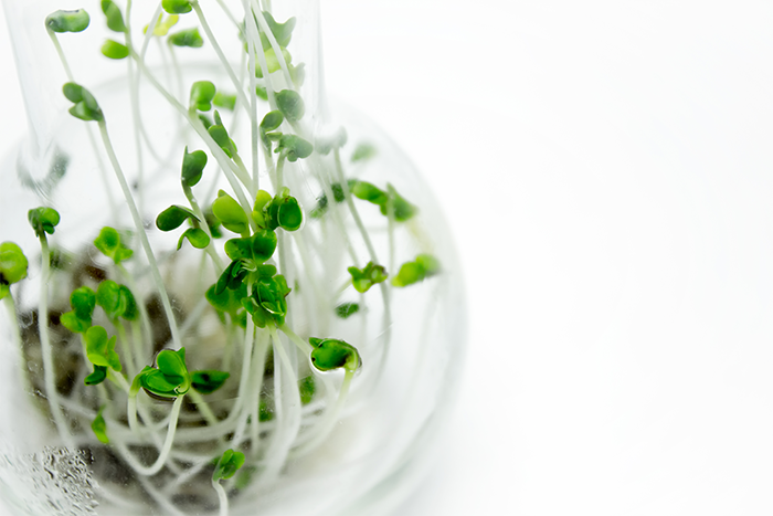 Broccoli sprout extract shows promise for head and neck cancer prevention