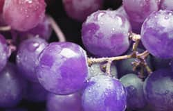Two new articles confirm numerous cardiovascular benefits for grape polyphenols