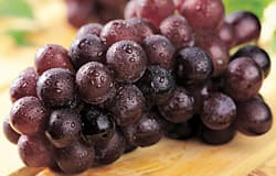Grape seed extract goes after aggressive cancer cells