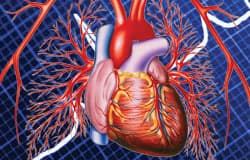 JAMA articles report the effects of positive behaviors on the heart