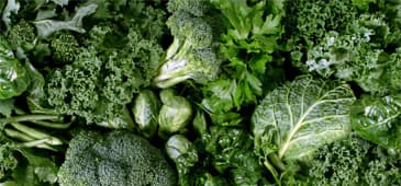 Research contributes to the understanding of how leafy vegetables support beneficial bacteria