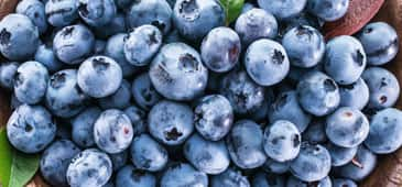 Blueberries show promise for improving cognitive impairment