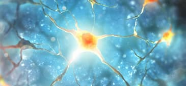 Vitamin-mineral supplement prevents brain cell loss in recent research