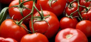 Eating more tomatoes could help protect against skin cancer