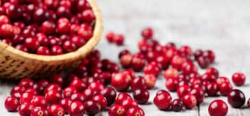 Cranberries may benefit gut bacteria