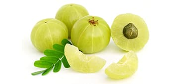 Amla improves cholesterol, triglycerides in dyslipidemic patients