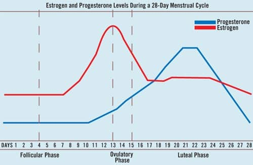 Estrogen and Progesterone Levels During a 28-day Menstrual Cycle