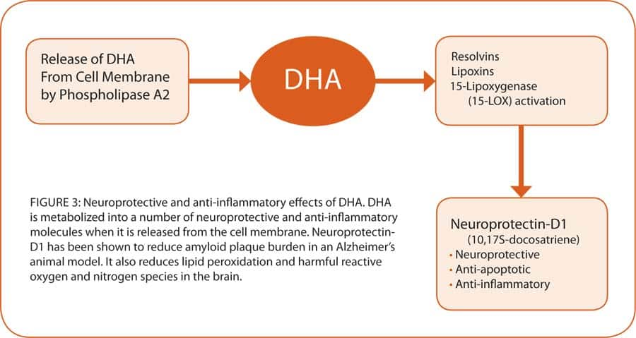 DHA and Brain Development - page 1 | Life Extension Magazine
