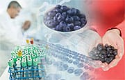 Can Blueberry Extracts Halt Metabolic Syndrome?