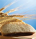Wheat: The Unhealthy Whole Grain