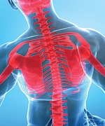 Chicken Cartilage Suppresses Joint Inflammation