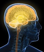 Melatonin Prolongs Life in Animal Model of Huntington's Disease