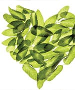 Basil A Potent One-Two Punch of Robust Flavor and Medicinal Advantages