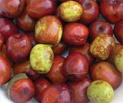 Jujube Seed Extract Boosts Antioxidant Defense