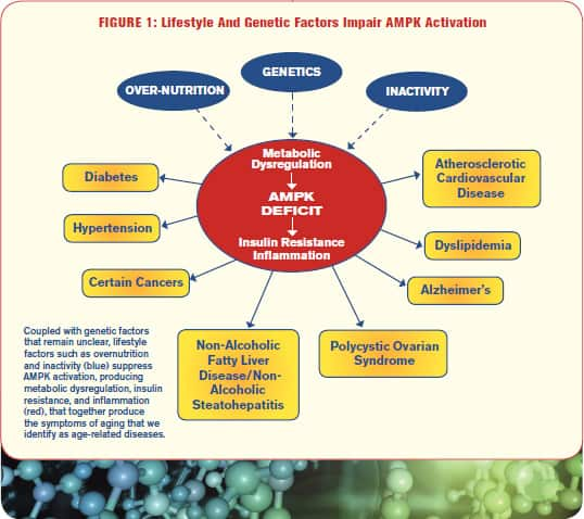 Lifestyle And Genetic Factors Impair AMPK Activation