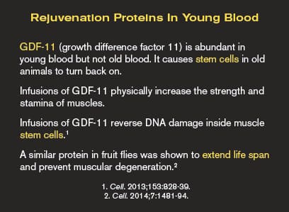 Rejuvenation Proteins In Young Blood
