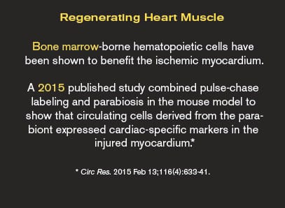 Regenerating Heart Muscle