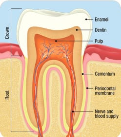 How Oral Health Impacts the Entire Body