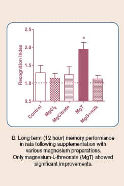 Short- and Long-Term Memory Enhancements by Various Magnesium Preparations