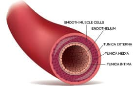 Vascular Disease Results In Erectile Dysfunction
