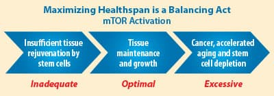 Balance mTOR to Burn Fat