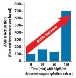 AMPK-Boosting Effects of Gynostemma pentaphyllum