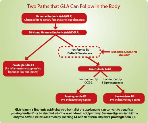 Two Paths that GLA Can Follow in the Body
