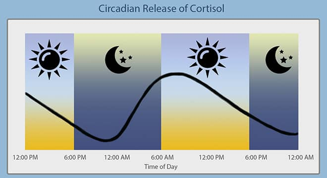 Circadian Rythym of Cortisol