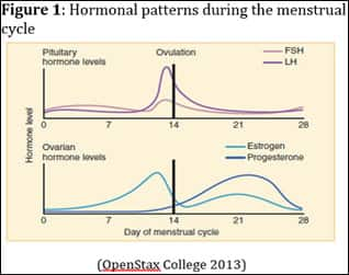 Hormonal patterns during the menstrual cycle