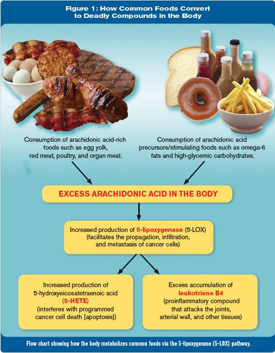 list of foods that are high in arachidonic acid