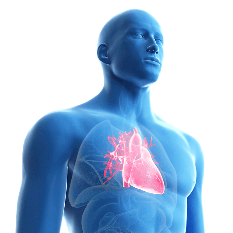 Diagram of blue man with heart highlighted