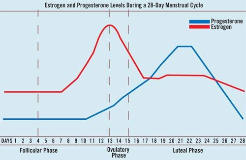 Эстрогены норма при беременности